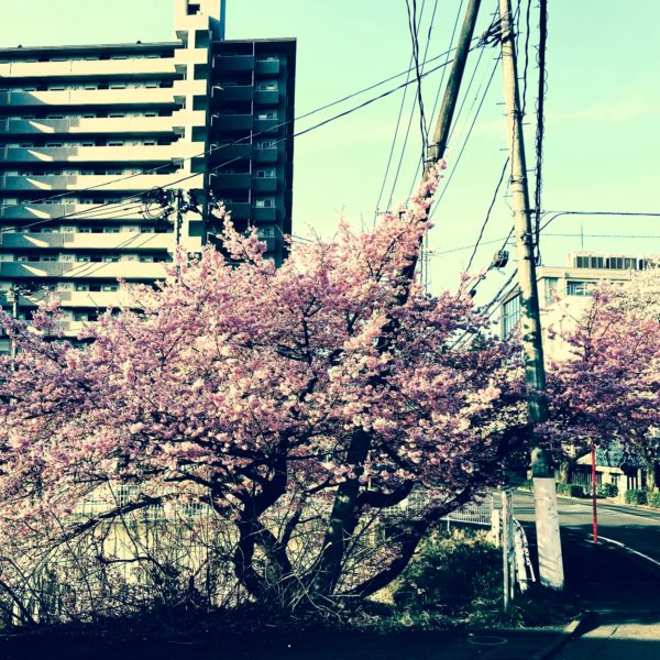 春起、暁。